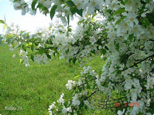 """""""Май бушует весной, Души наши пьянит Одурманенным запахом сада. Вишня цветом манит... фото 15"""