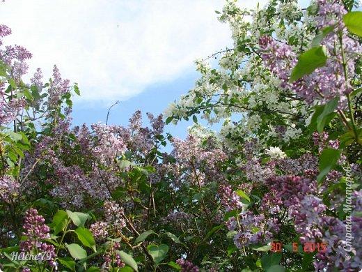 """""""Май бушует весной, Души наши пьянит Одурманенным запахом сада. Вишня цветом манит... фото 22"""