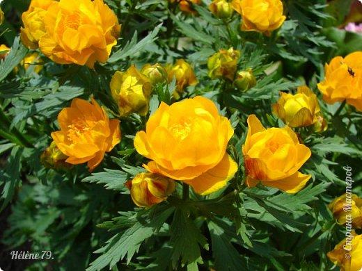 """""""Май бушует весной, Души наши пьянит Одурманенным запахом сада. Вишня цветом манит... фото 29"""