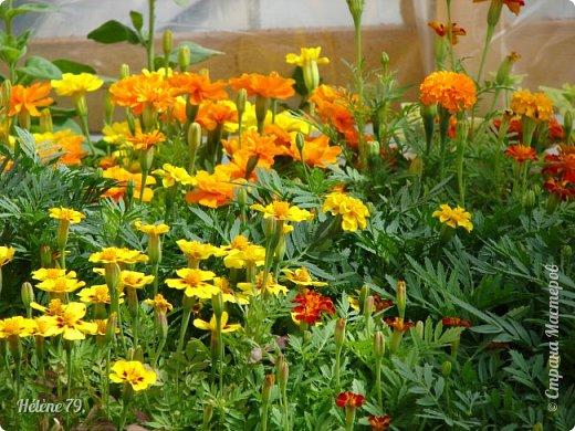 """""""Май бушует весной, Души наши пьянит Одурманенным запахом сада. Вишня цветом манит... фото 35"""