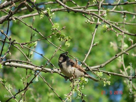 """""""Май бушует весной, Души наши пьянит Одурманенным запахом сада. Вишня цветом манит... фото 7"""