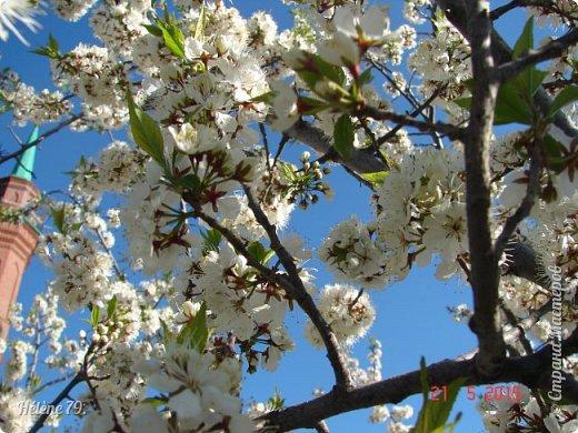 """""""Май бушует весной, Души наши пьянит Одурманенным запахом сада. Вишня цветом манит... фото 6"""
