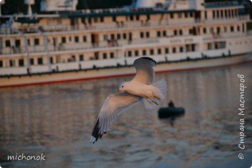 """Работа на конкурс """" Мир в фотографии """". Номинация 1. Дикая фауна. На фотографии - чайка, набережная Волги в Угличе. фото 1"""