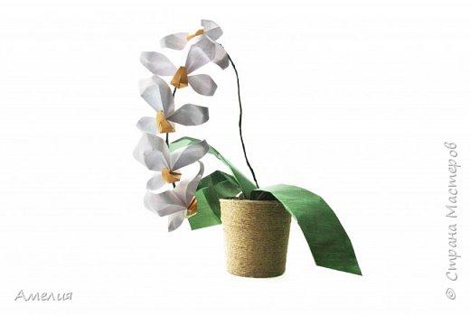Орхидея+МК
