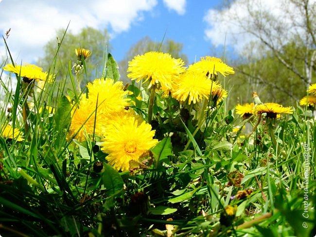 Это Иоанн Кронштадтский, святой праведник, сказал, что цветы – остатки рая на земле. И разве нельзя назвать райским местом этот родник в Бешпельтирском логу? У нас, в Горном Алтае, такая красота повсюду. И я приглашаю вас на неспешную прогулку по цветущему Алтаю. фото 51