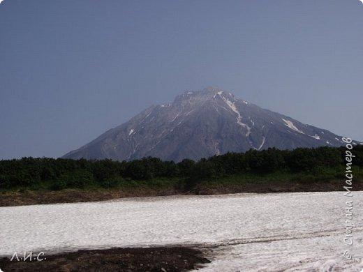 Здравствуйте! Хочу познакомить Вас со своей Родиной! Камчатка-это край вулканов и сказочной красоты природы. Наш край просто невозможно не любить. Туристам, хоть раз полюбовавшимся её красотами, хочется, если не остаться здесь навсегда, то возвращаться снова и снова. А мы, местные жители, с гордостью можем сказать, что это НАШ вариант рая на Земле. И так...Номинация 1:Дикая фауна. На фото детишки Бурого Медведя. Фото сделано на Курильском озере (заповедная территория), где бурых медведей великое множество.   фото 8