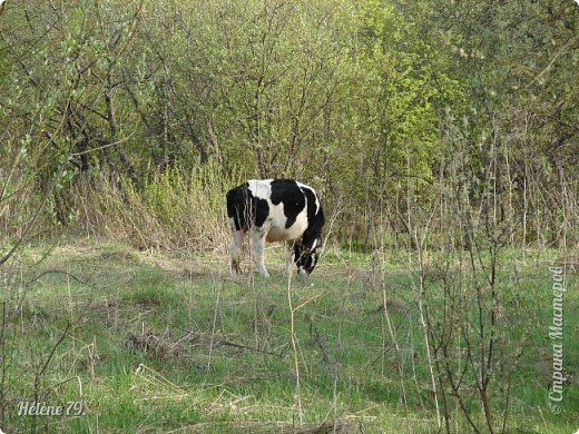 """""""Ох ты, козочка-коза! Всё гуляешь, дереза! Всё травинушку жуешь!...""""  (К. Авдеенко) фото 18"""