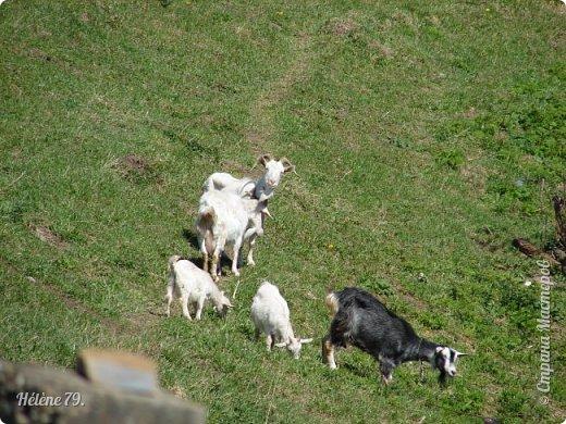 """""""Ох ты, козочка-коза! Всё гуляешь, дереза! Всё травинушку жуешь!...""""  (К. Авдеенко) фото 15"""
