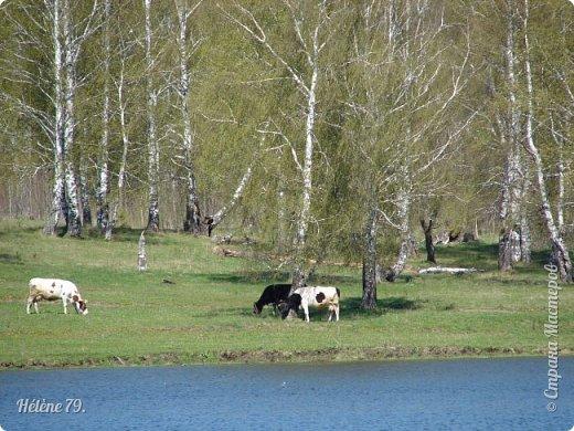 """""""Ох ты, козочка-коза! Всё гуляешь, дереза! Всё травинушку жуешь!...""""  (К. Авдеенко) фото 19"""