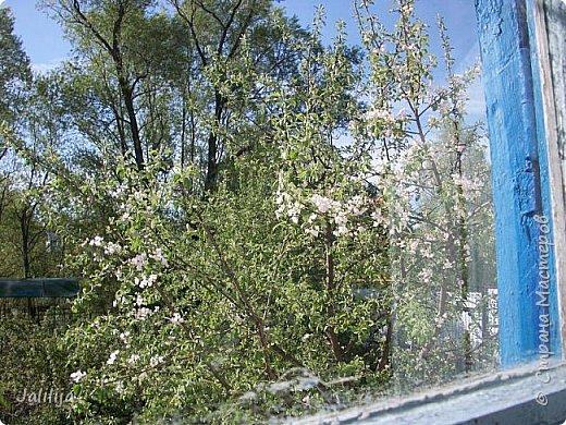 Основной цвет мая? Ошибаетесь, если думаете - зелёный. Зелёный цвет - цвет весны. А цвет мая в наших краях - белый. И этот цвет имеет изумительный аромат! И звучание - многоголосое жужжание пчёл. фото 7