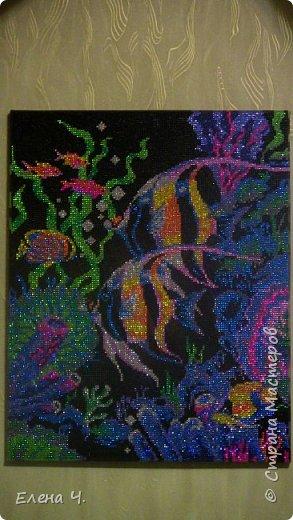 Подводное царство фото 2