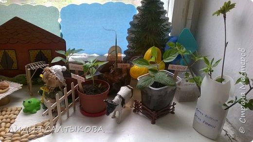"""этой весной на окошке нашей группы """"Фантазеры"""" в детском саду красовался вот такой огород. фото 2"""