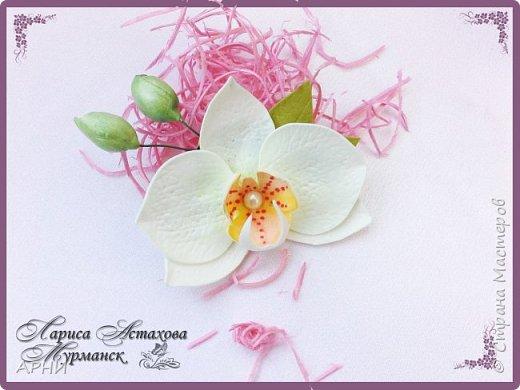 Бум на Орхидеи