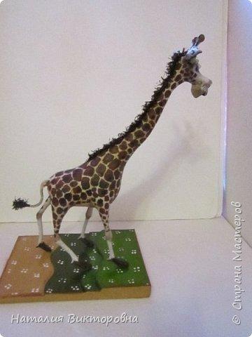 Жираф 2! фото 6