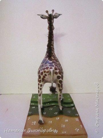 Жираф 2! фото 4