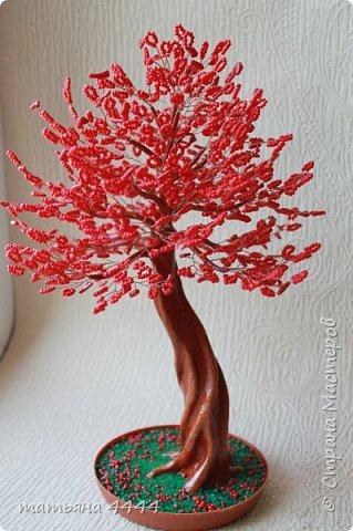 коралловое фото 1