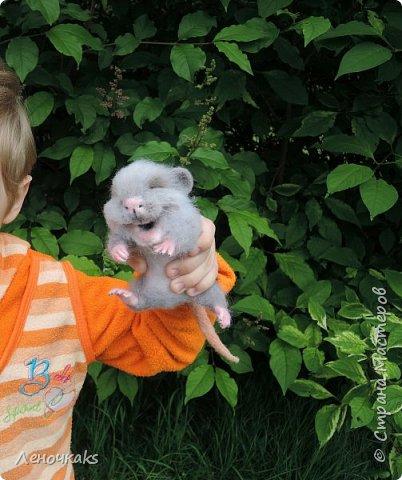 Мышонок на цветке фото 5