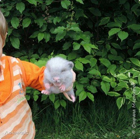 Мышонок на цветке фото 4