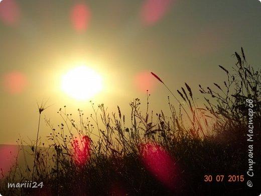 """Добрый день. Я участвую в конкурсе фотографий, который устроила Wonder Hawk 19 (ссылка на конкурс - http://stranamasterov.ru/node/1029450?c=favorite).  Номинация №1 - Дикая фауна - """"Чайка"""": фото 4"""