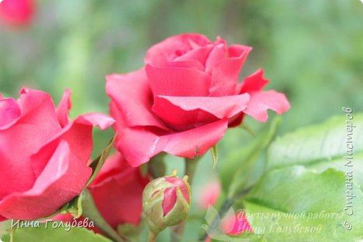 Девочки,привет! После мк кустовой розочки,стояла моя беляночка одинокая) А тут у меня в саду распустились кустовые розы красного цвета.Я как их увидела не смогла пройти равнодушно,сорвала одну и повторила в тройном экземпляре.Так родились сестрички для моей беляночки) Ну и орешки в тему пригодились.Вот такая сказка получилась в цветочной композиции) фото 9