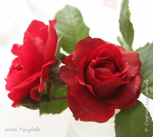 Девочки,привет! После мк кустовой розочки,стояла моя беляночка одинокая) А тут у меня в саду распустились кустовые розы красного цвета.Я как их увидела не смогла пройти равнодушно,сорвала одну и повторила в тройном экземпляре.Так родились сестрички для моей беляночки) Ну и орешки в тему пригодились.Вот такая сказка получилась в цветочной композиции) фото 4