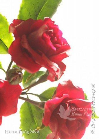 Девочки,привет! После мк кустовой розочки,стояла моя беляночка одинокая) А тут у меня в саду распустились кустовые розы красного цвета.Я как их увидела не смогла пройти равнодушно,сорвала одну и повторила в тройном экземпляре.Так родились сестрички для моей беляночки) Ну и орешки в тему пригодились.Вот такая сказка получилась в цветочной композиции) фото 8
