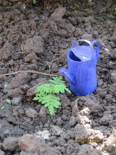 К лету пора готовиться. Мы начали почему-то с садового инвентаря. Наверное потому, что его легко делать) фото 7