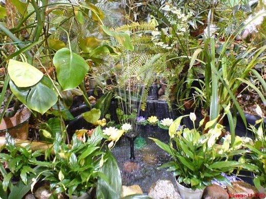 Есть в Санкт-Петербурге сады Миндо – маленькие островки счастья, где рождаются и живут тропические бабочки. Мне посчастливилось бывать несколько раз в этих экзотических местах. Представляю наиболее удачные фотографии виденных бабочек. фото 10