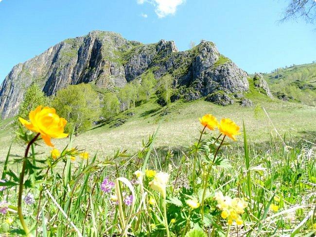 Это Иоанн Кронштадтский, святой праведник, сказал, что цветы – остатки рая на земле. И разве нельзя назвать райским местом этот родник в Бешпельтирском логу? У нас, в Горном Алтае, такая красота повсюду. И я приглашаю вас на неспешную прогулку по цветущему Алтаю. фото 52