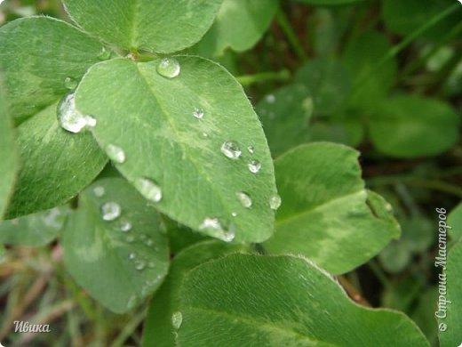 Весна в этом году у нас очень дождливая. Очень. Буйство цветения пришлось на самые дождливые дни. Ну что же, тогда у нас будет вот такое фото цветущей сирени в каплях дождя! фото 2