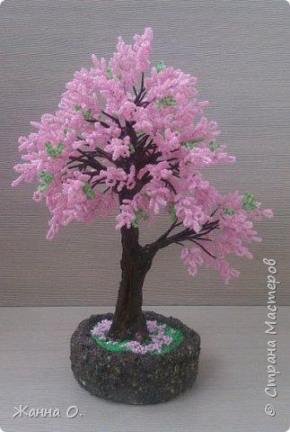Мне очень нравятся цветущие деревья. Одно из них - сакура.  фото 1
