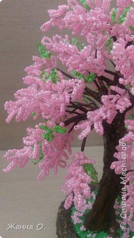 Мне очень нравятся цветущие деревья. Одно из них - сакура.  фото 2