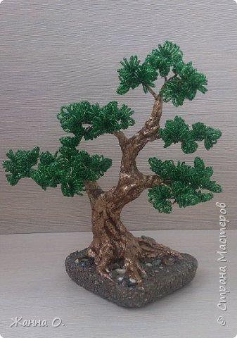 Деревья из бисера - очередное моё увлечение.  Представленный на фото бонсай выполнен в стиле Мойо-ги (неформальный вертикальный стиль), при котором ствол дерева имеет ряд изгибов. Данный стиль подходит практически для всех видов деревьев.  фото 1
