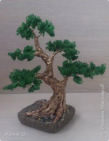Деревья из бисера - очередное моё увлечение.  Представленный на фото бонсай выполнен в стиле Мойо-ги (неформальный вертикальный стиль), при котором ствол дерева имеет ряд изгибов. Данный стиль подходит практически для всех видов деревьев.  фото 2