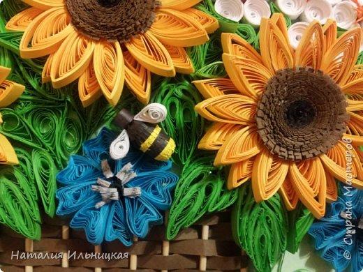 Цветы солнца фото 3