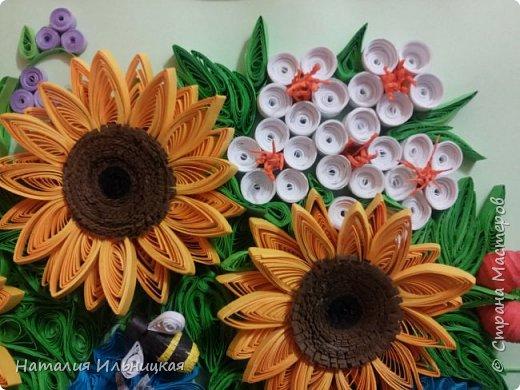 Цветы солнца фото 4