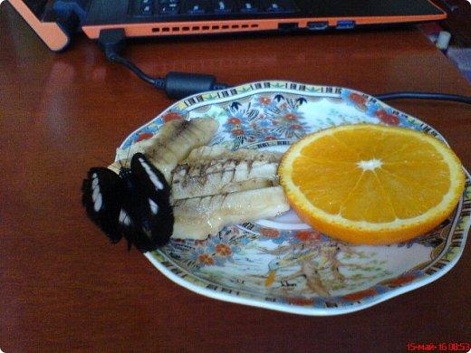 Продолжаю свой репортаж о бабочках из сада Миндо.   Бабочка Калиго - первая красавица, прибывшая в дом из сада (фото 2011года).   На кухонном столе корзина с живыми цветами и комнатный цветок - идеальные условия для домашней бабочки. фото 3