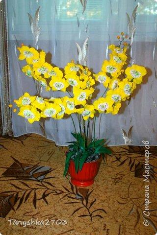 Желтая орхидея (похожа на цимбидиум) фото 1