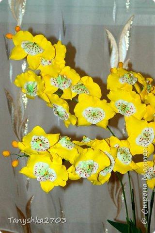 Желтая орхидея (похожа на цимбидиум) фото 2