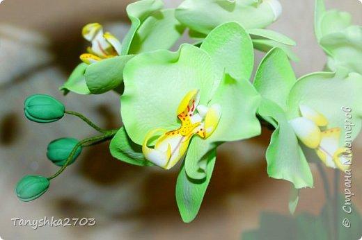 Желтая орхидея (похожа на цимбидиум) фото 6