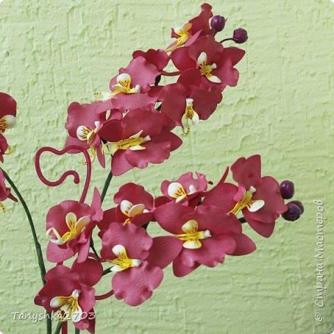 Желтая орхидея (похожа на цимбидиум) фото 4