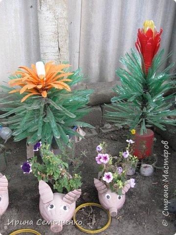 Вот решила Вам показать свои поделки из пластиковых бутылок.Ведь из такого ненужного материала можно сделать много интересных вещей  для сада. Пальма с кокосами. фото 8
