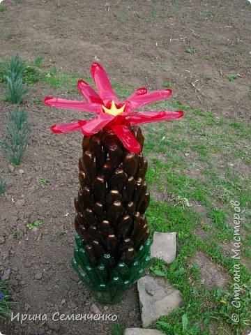 Вот решила Вам показать свои поделки из пластиковых бутылок.Ведь из такого ненужного материала можно сделать много интересных вещей  для сада. Пальма с кокосами. фото 6