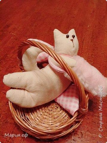 кошка с крыльями фото 3