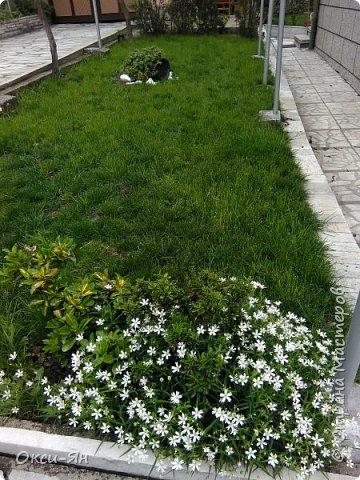 Здравствуйте всем!хочу похвастаться своими растениями.Я много лет оформляла двор в английском стиле,Т.Е. многолетние растения и всегда что-то цветет.И ,сейчас,мне очень нравиться фото 16