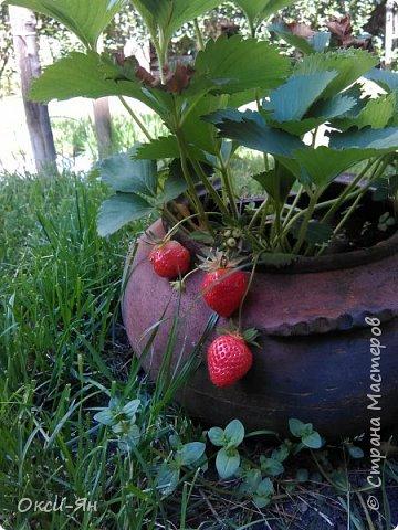 Здравствуйте всем!хочу похвастаться своими растениями.Я много лет оформляла двор в английском стиле,Т.Е. многолетние растения и всегда что-то цветет.И ,сейчас,мне очень нравиться фото 7