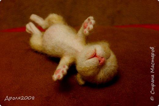 Валяные котятки. В фотосессии принимала участие моя кошка Нюша. фото 5
