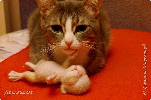 Валяные котятки. В фотосессии принимала участие моя кошка Нюша. фото 6