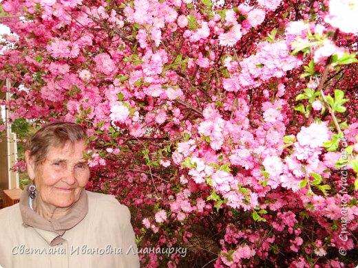 здравствуйте, жители Страны! хочу показать вам какое чудо именно сейчас цветет в пригороде Иркутска. среди моих хороших знакомых много творческих людей, одна из них-Тамара Хрисановна. у нее два хобби-это дача и вышивка крестом. 27 мая мы побывали у нее на даче,чтобы посмотреть как цветет сакура.цветение сакуры начинается прямо от начала ствола , это такая красота не передать словами. фото 6