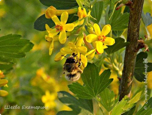 """Работа на конкурс """" Мир в фотографии """". Номинация 1. Полет пчелы фото 1"""